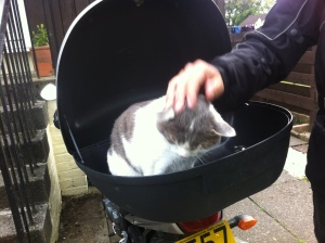 The cat attempts to join the motorbike tour honeymoon...