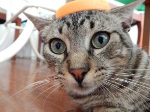 cat astonished