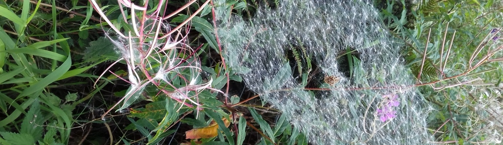 close-up of a spider's web on bushes by Emma Baird